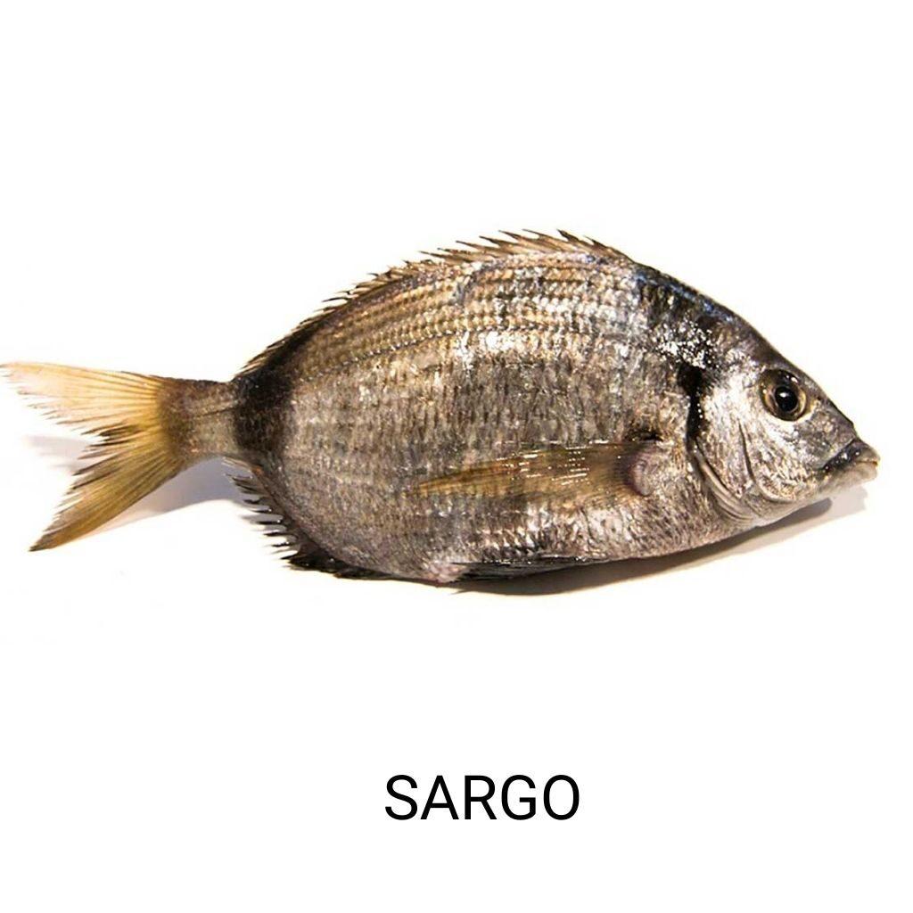 pescado-azul-sargo