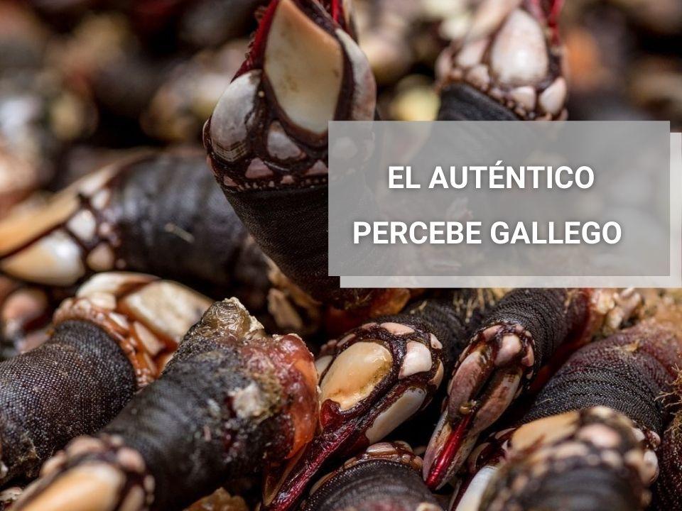 Autentico-Percebe-Gallego