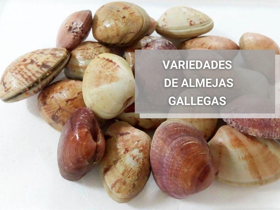 Almejas-gallegas