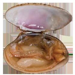 interior almeja rubia gallega